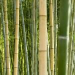 Revoluční ponožky z bambusu