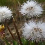 Podzimní alergie útočí