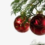 Vánoční stromeček umělý, řezaný nebo živý?