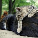 Co na Vás prozradí spánková poloha?