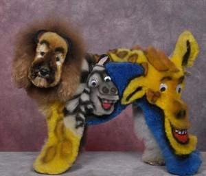 lev,žirafa, zebra-pes