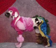 papoušek-pes